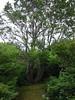 Grape Island Tree