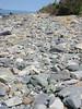 Pebble close up. Peddock's Island