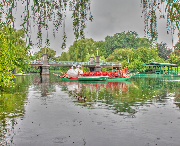 Swan boats on a rainy day in the Public Garden.  Boston, MA
