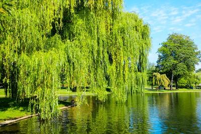 Swan Lake Boston Common