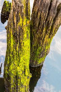 Green Moorings