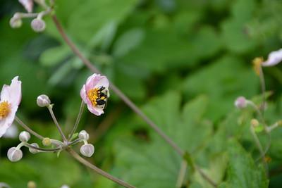 botanicalgarden2015-4