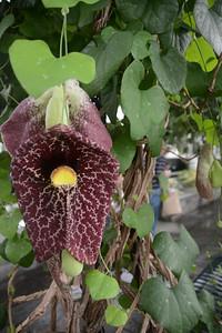 botanicalgarden2015-16