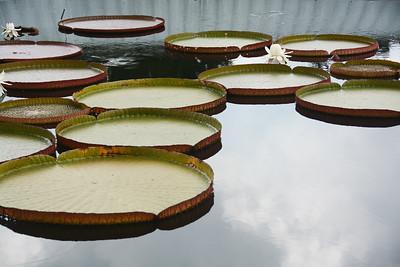 botanicalgarden2015-20