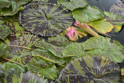 botanicalgarden2015-22