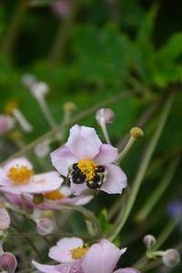 botanicalgarden2015-5