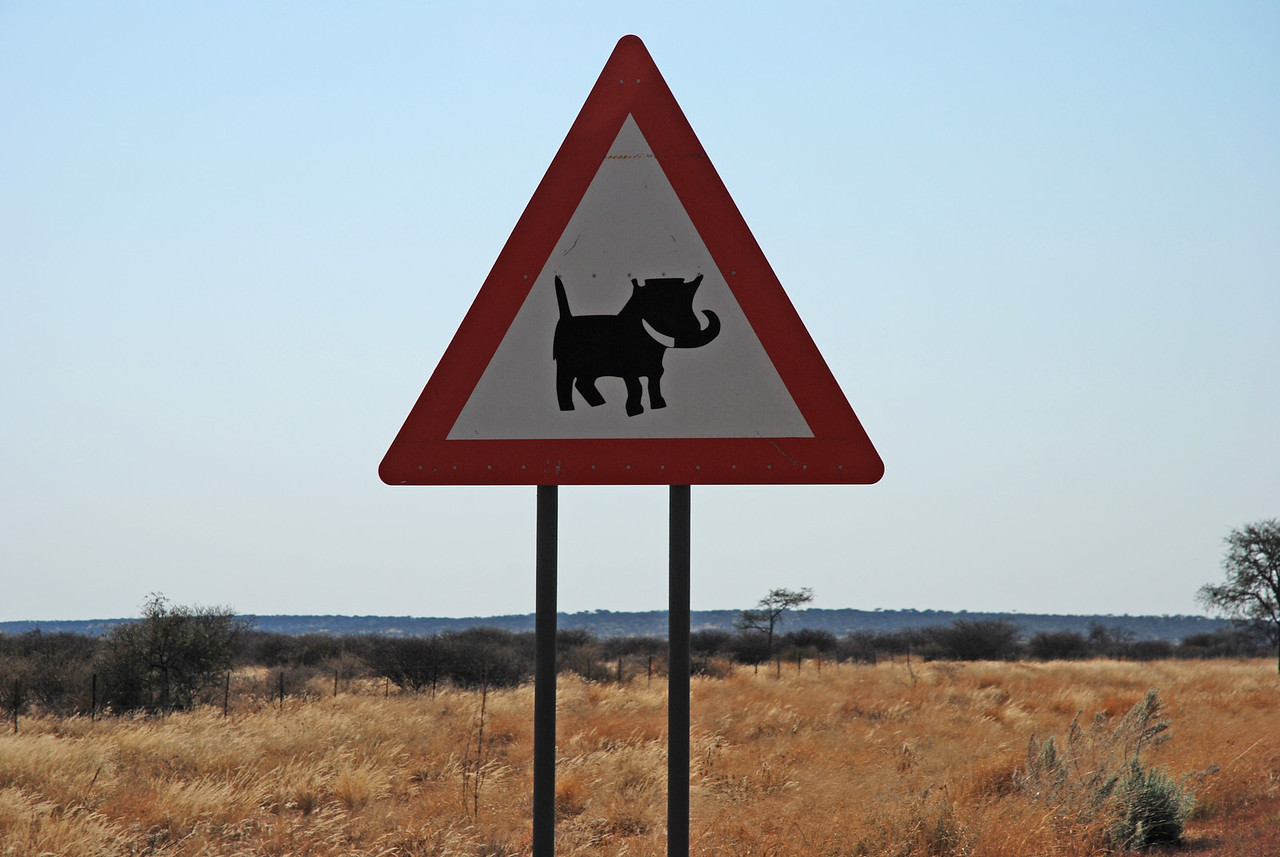 "The first of many warning signs<br /> <br /> From the airport, we continued east for 200km on the Trans-Kalahari Highway (B6) towards Gobabis. About 30km east of the airport, we passed our first ""watch-for-warthogs"" signs. Warthogs are often described as being rather grotesque, but I believe that they are not without some appeal. They are brownish-grey and pig-like in appearance, with bristle-like hairs scattered over their bodies, a mane of long hair down their backs, wart-like lumps on their faces and upward pointing tusks on their snouts. They run with their thin tails erect, which gives them a certain endearing quality. We were to see many warthogs along the highway this day. While the highway had been busy in both directions near Windhoek, we soon found ourselves alone on the road. We took to hugging the centre of the highway so that we would have more time to avoid the suicidal warthogs which would inevitably dash out onto the highway in front of us."