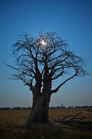 Botswana 2010
