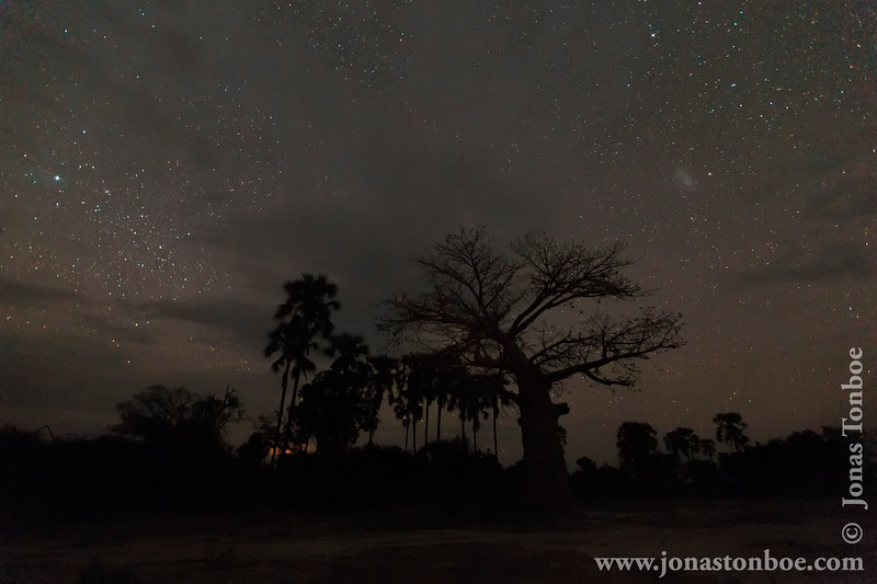 Baobab and Palm Trees Against Starry Sky