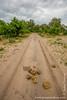 Road Through Bush