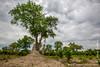 Bush and Termite Mound