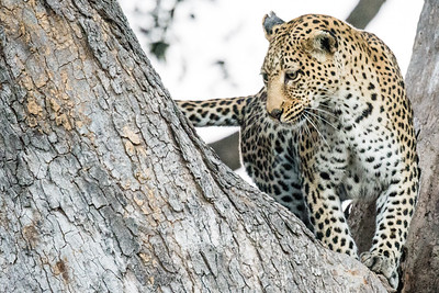 20170630_Southern Africa 0103