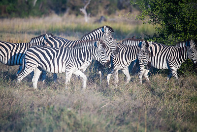 20170630_Southern Africa 0097