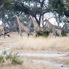 20170707_Southern Africa 0297