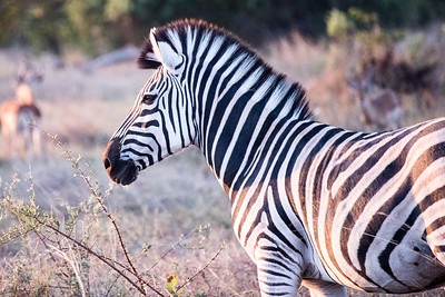 20170630_Southern Africa 0099