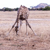 20170706_Southern Africa 0281