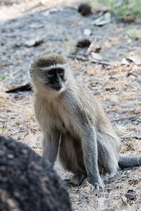 20170630_Southern Africa 0095
