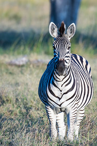 20170630_Southern Africa 0098