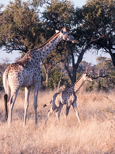 20170701_Southern Africa 0111