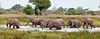 100_7191<br /> The herd of elephants enjoy the water.