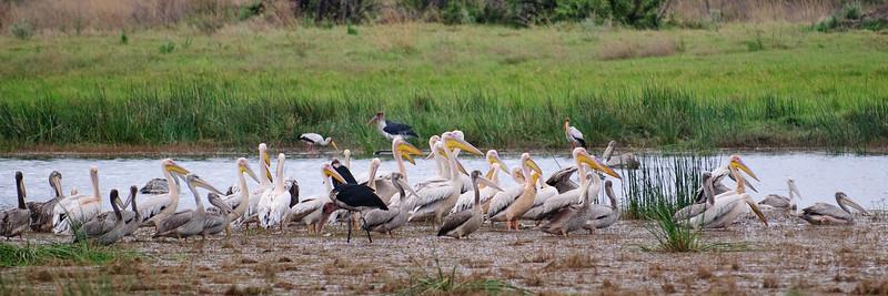 100_6886<br /> Various water birds