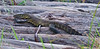 100_5603<br /> Water monitor