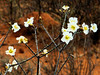 presents some lovely blossoms,