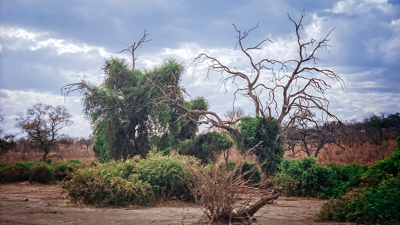 The Dry Season in Botswana