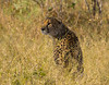 The only cheetah I saw on the trip was sitting beside the road and slinked away when the vechicled approached.