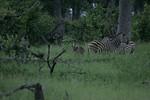 KA6P4418 Botswana, Okavanga, Game Park, Safari