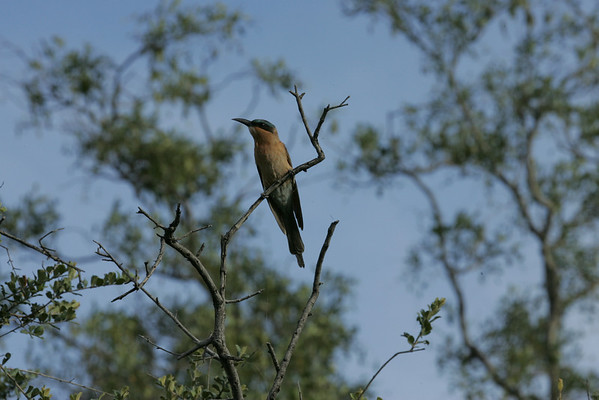 KA6P4191 Botswana, Okavanga, Game Park, Safari