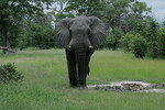KA6P4467 Botswana, Okavanga, Game Park, Safari