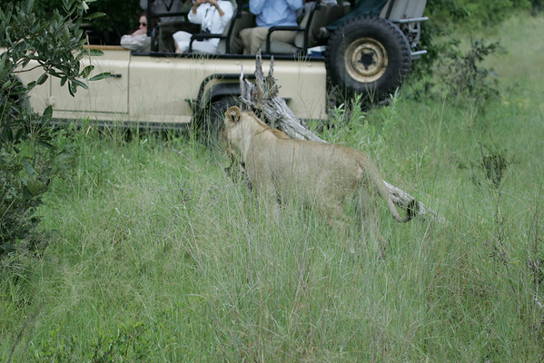 KA6P5995 Botswana, Okavanga, Game Park, Safari
