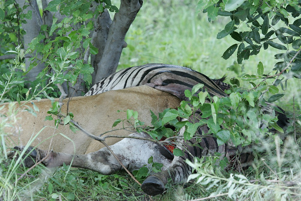 KA6P5988 Botswana, Okavanga, Game Park, Safari