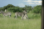 KA6P6399 Botswana, Okavanga, Game Park, Safari