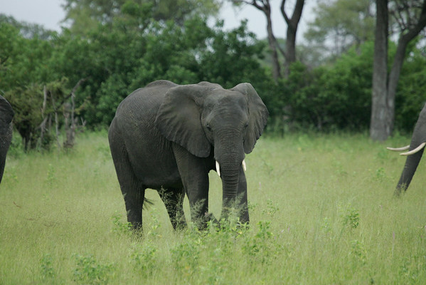 KA6P5082 Botswana, Okavanga, Game Park, Safari
