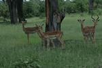 KA6P4525 Botswana, Okavanga, Game Park, Safari
