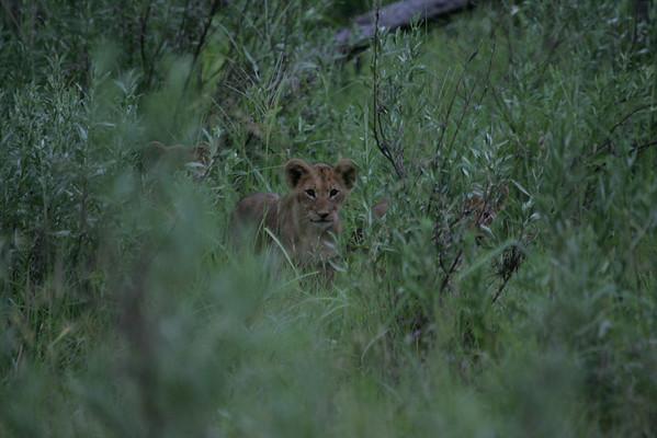 KA6P5682 Botswana, Okavanga, Game Park, Safari