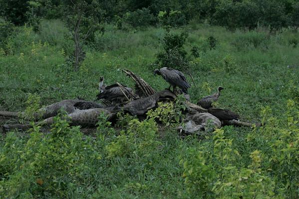 KA6P4488 Botswana, Okavanga, Game Park, Safari
