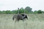 KA6P6114 Botswana, Okavanga, Game Park, Safari