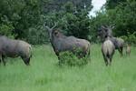 KA6P5578 Botswana, Okavanga, Game Park, Safari