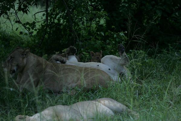 KA6P5943 Botswana, Okavanga, Game Park, Safari