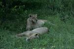 KA6P5858 Botswana, Okavanga, Game Park, Safari