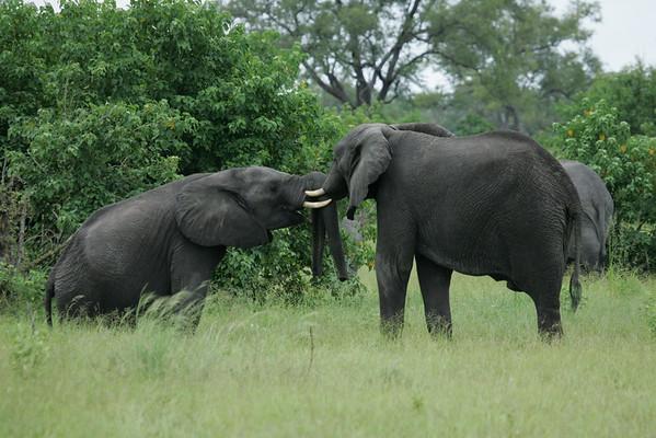 KA6P5128 Botswana, Okavanga, Game Park, Safari
