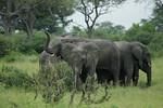 KA6P5083 Botswana, Okavanga, Game Park, Safari