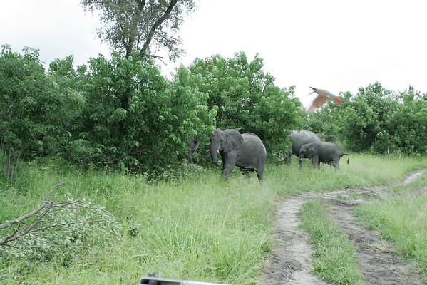 KA6P5301 Botswana, Okavanga, Game Park, Safari