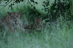 KA6P5775 Botswana, Okavanga, Game Park, Safari