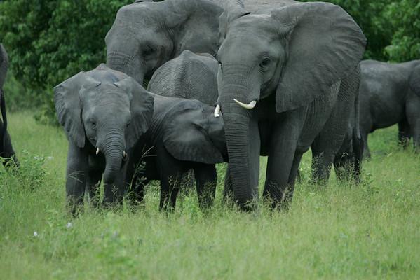 KA6P5109 Botswana, Okavanga, Game Park, Safari