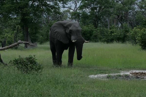 KA6P4466 Botswana, Okavanga, Game Park, Safari