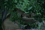 KA6P5733 Botswana, Okavanga, Game Park, Safari